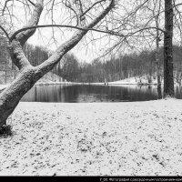 Фото 7_02. :: Игорь Ринкевич