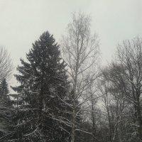 Деревья зимой :: Сапсан