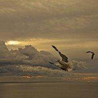 Никогда не учите птиц летать... :: Александр Бойко