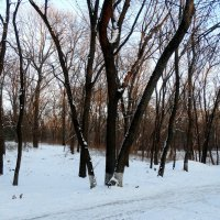 Лесопарк в начале зимы... :: Тамара (st.tamara)
