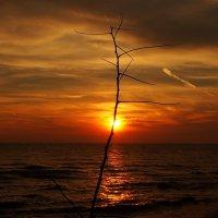 Мир встречает солнечный восход :: Swetlana V