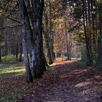 А я иду тихонечко по осени ... :: Владимир Икомацких