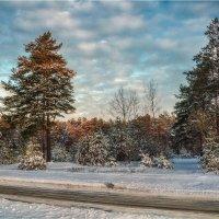 Зимним утром в Славутиче. :: Константин Ушмаев