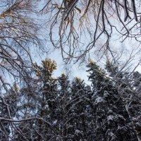 Смотрите вверх - там красиво! :: Владимир Безбородов