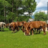 Пасутся кони у села :: Сергей Чиняев