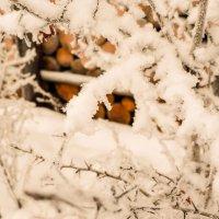 Кружева зимушки :: Елена Фалилеева-Диомидова