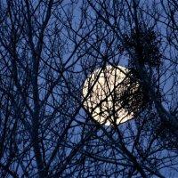 Заигравание с луной :: Николай Сапегин
