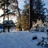 В зимнем лесу :: Валерий Толмачев