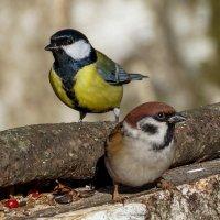 Посмотрите в объектив - сейчас вылетит птичка! :: Павел Руденко
