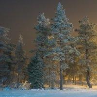 Сосны в заполярном лесу :: Vadim Odintsov