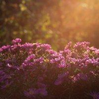 В лучах заходящего солнца... :: Любовь Анищенко