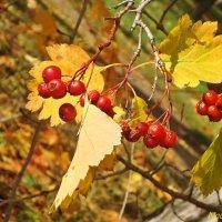 Осенние зарисовки на природе :: Лидия (naum.lidiya)