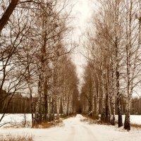 белая дорога в березах :: Александр Прокудин