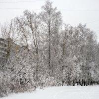 заморозило :: Лариса Батурова