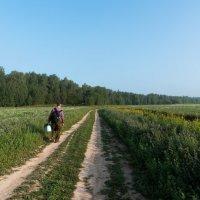 Лето было грибное... :: Владимир Безбородов