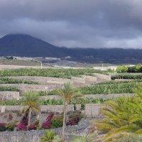 Плантации бананов и вулкан Тейде у отеля Abama Golf & Spa Resort 5* :: Елена Павлова (Смолова)