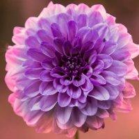 Цветок у дороги :: Юрий Лутов