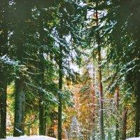 В лесу родилась ёлочка.. :: Виктор Заморков