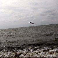 Чайка :: Svetlana Lyaxovich