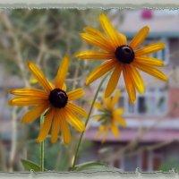 Цветы, как люди, на добро щедры... :: Людмила Богданова (Скачко)