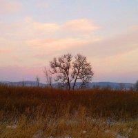 Деревце после заката :: Милла Корн