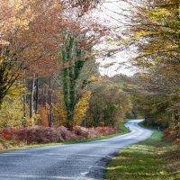 Осень :: Наталья Белик