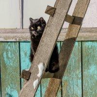 Котя на прогулке! :: Ирина Антоновна
