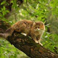 Кошка которая гуляла сама по себе.... :: Алексей Дмитриев