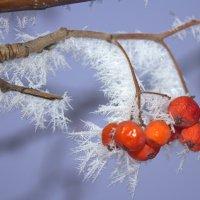 Снежное лакомство :: оксана косатенко