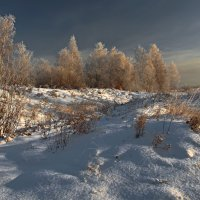 Зимние берёзки кучками стоят... :: Александр Попов
