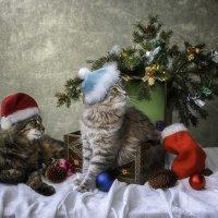 Приближается Рождество :: Ирина Приходько
