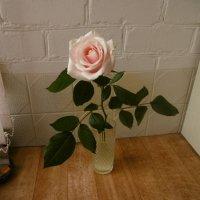 Одинокая роза... :: татьяна