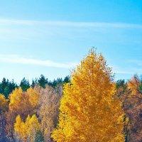 Золотая осень :: Владислав Абрамов