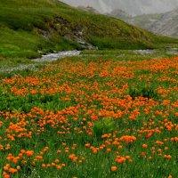 В долине цветов :: KULIBIN 50