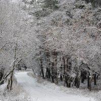 зима :: Юлия Морозова
