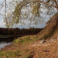 Осень на реке Луга. :: Любовь Анищенко