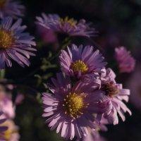 Осенние цветы :: Любовь Анищенко