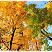 Краски сентября #1 :: Андрей Головкин