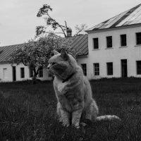 Кот с острова Коневец :: Алексей Горский
