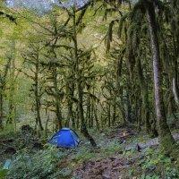 В самшитовом лесу :: Александр Криулин