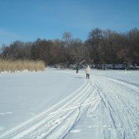 Соскучившиеся по лыжам... :: марина ковшова