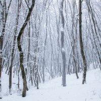 Непогода в лесу :: Нина Сигаева