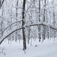 Прогулка по зимнему лесу :: Сергей Тагиров