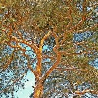 Солнечное дерево :: Натали Пам