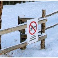 Езда по снегу (англ. Icebiking или Snowbiking) :: юрий