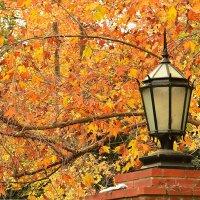 Бешеная осень :: Николай Танаев