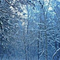 Зима :: Натали Пам
