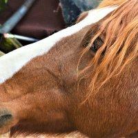 лошадь :: Anji 14 Ilgova