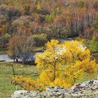 Золотая осень в Хакасии :: MaOla ***