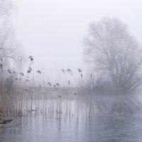 Мороз и туман :: Елена Пономарева